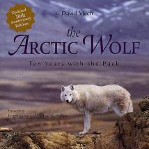 Arctic_wolf-L._David_Mech